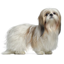 Small Dog Breeds A List Of Small Dog Breeds From A Z