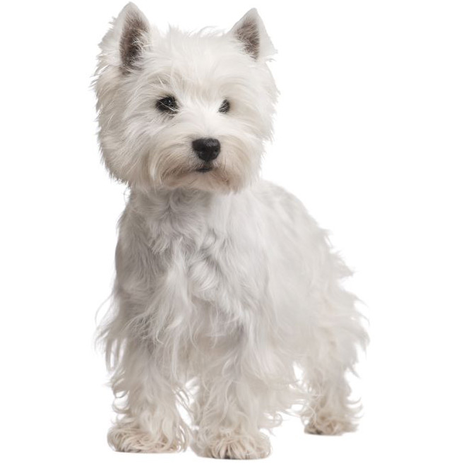 Dogs With West In Breed Name